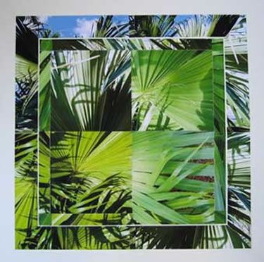 Loxahatchee Palm Collage